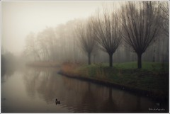 alone..... (Zino2009 (bob van den berg)) Tags: trees winter light mist cold nature silhouette misty fog grey duck alone nebel sad nederland willow single fade sight somber less neighbourhood contour eend alleen mistig zicht vaag outofsight wildeeend bobvandenberg zino2009 bobphotography