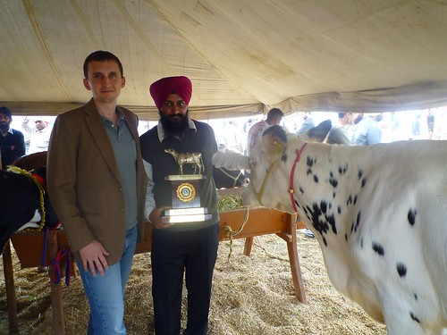 Mr. Rode is pictured here with Thom Wright, a FAS agricultural attaché in India, and one of Mr. Rode's American-origin Holstein crosses which won a milk production award at the Progressive Dairy Farmers Association show.