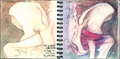 Hip shift. 26 February - 2 March, 2011. (Sharon Frost) Tags: hip anatomy art pelvis spine piriformis bones skeletons sketchbooks daybooks sharonfrost journals notebooks sketches drawings paintings haiku