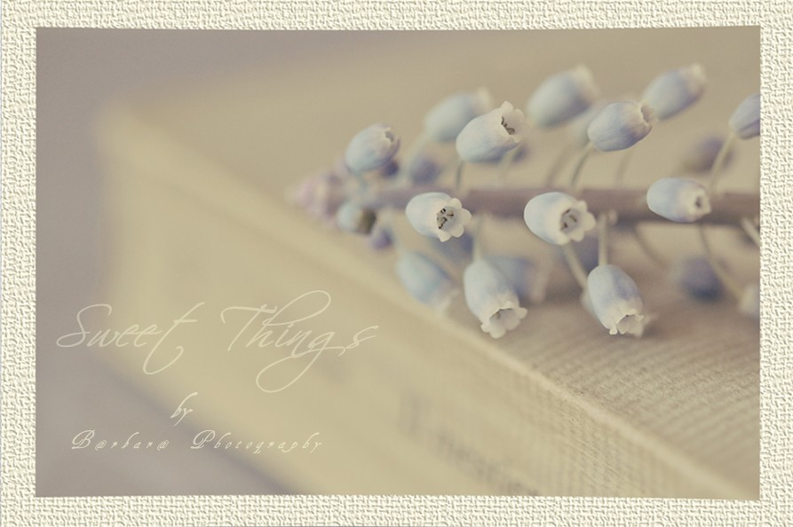 {  Sweet Things  }