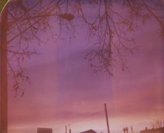 (abdukted1456) Tags: trees winter sunset ny newyork silhouette polaroid december image branches integral 1200 spectra expired expiredfilm landcamera rensselaer spectrasystem spectrase