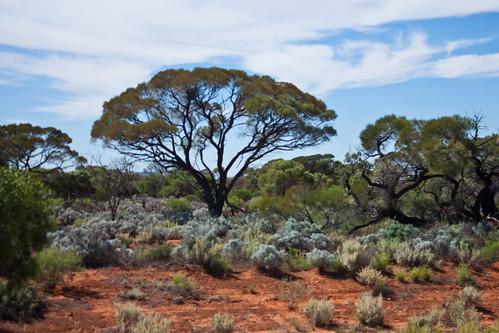 South Australia-4
