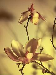 lente (Bregje Paulussen) Tags: spring lente