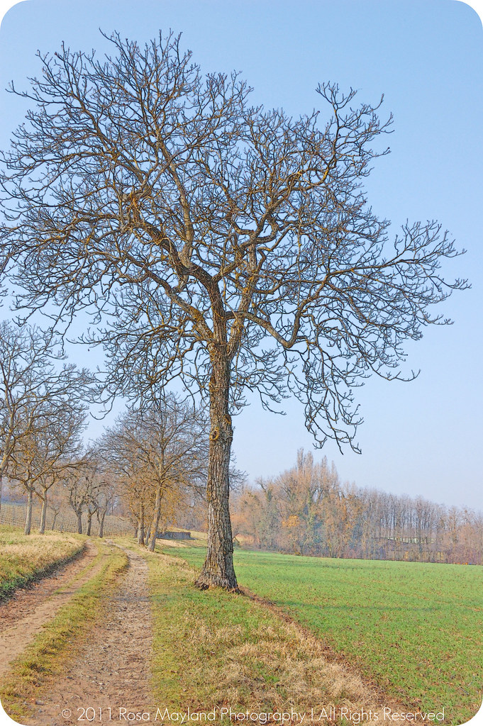 Spring sierne Tree 1 bis