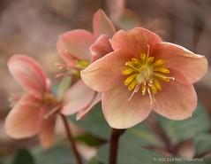 flower (JSB PHOTOGRAPHS) Tags: flower nikon d2x 18200mm