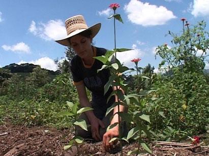 Fieldwork in Mexico III