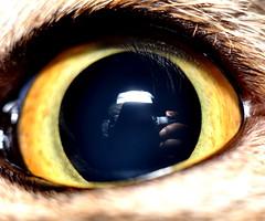 A reflection in a cat's eye (Dato' Professor Dr. Jamaludin Mohaiadin) Tags: macro reflection eye cat photo nikon secret malaysia prof mata dato kucing d90 jamaludin mohaiadin
