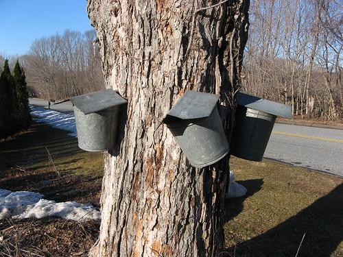 Buckets #1