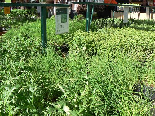 herbes 2.jpg