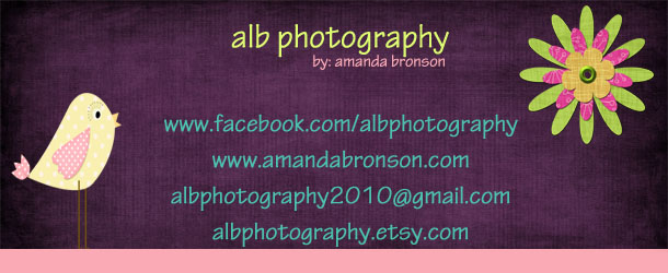 alb photography banner