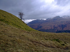 Tree skyline (nz_willowherb) Tags: see climb scotland tour walk hill perthshire visit tourist visitor killin sronachlachain to go visitkillin seekillin gotokillin