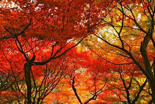Хрупкая красота Японии japan7