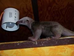 Tasting the lamp