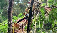 Mundo Nuevo Cundinamarca (camiloorjuela) Tags: de colombia bosque andes alto niebla andino tropicales biodiversidad cundinamarca