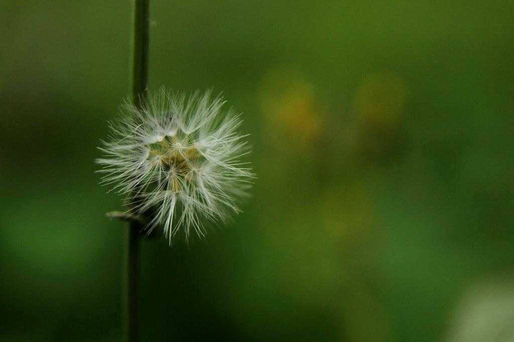 微距下不起眼的草花