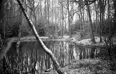 Self developed (sarahnb) Tags: trees blackandwhite reflection film nature water forest ilford 125 phenix selfdeveloped f17