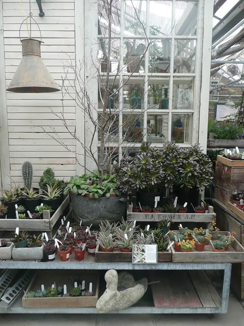 Terrain plants