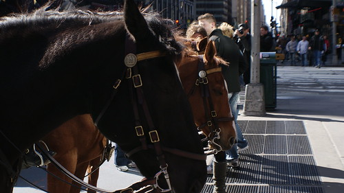 New York Horse by Mdrewe