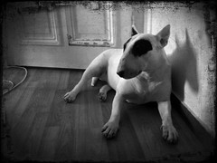 iflickr (sdzn) Tags: thelittledoglaughed lomob iphoneography