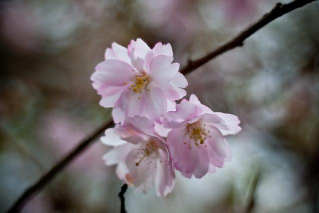 060411_ blossom #2