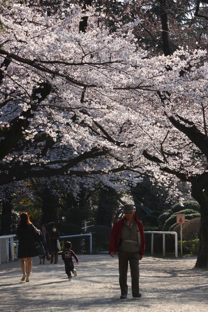 Sakura Photo 2011Bajikouen (14)