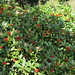 R.H.S. Garden Wisley