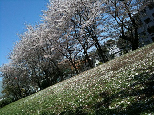 青い空とピンクの花びらと緑の草が心地良い。