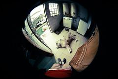 (Julio Rossi) Tags: portrait dog selfportrait film paran brasil canon husky retrato autoretrato sigma fisheye curitiba cachorro pelicula filme olhodepeixe juliorossi