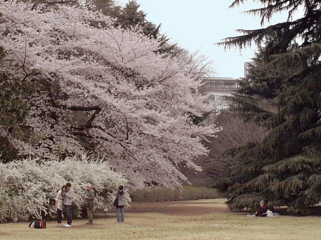 桜の花と人々のフリー写真素材