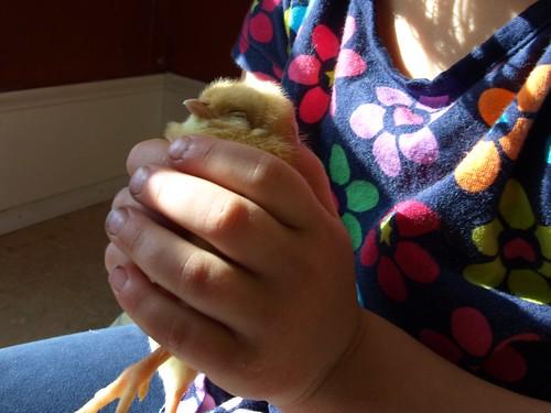 chicks 060