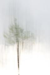 Short Line ((Luciano)) Tags: tree 35mmf18 d5000 intentionalcameramovement dwcfflightpaint titlereminiscentofthecameramovementwhiletheshutterwasopen