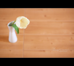 Living Desire ! (Faisal | Photography) Tags: life flower colors canon eos still dof natural bokeh 14 tulip usm 50 ef canonef50mmf14usm 50d canoneos50d faisal|photography