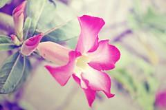 flower (JM Salvador) Tags: plant flower nature nikon dream d3100