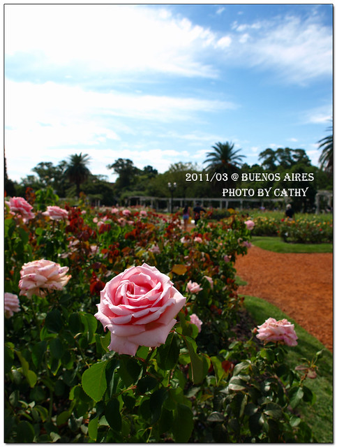 rose plaza-16