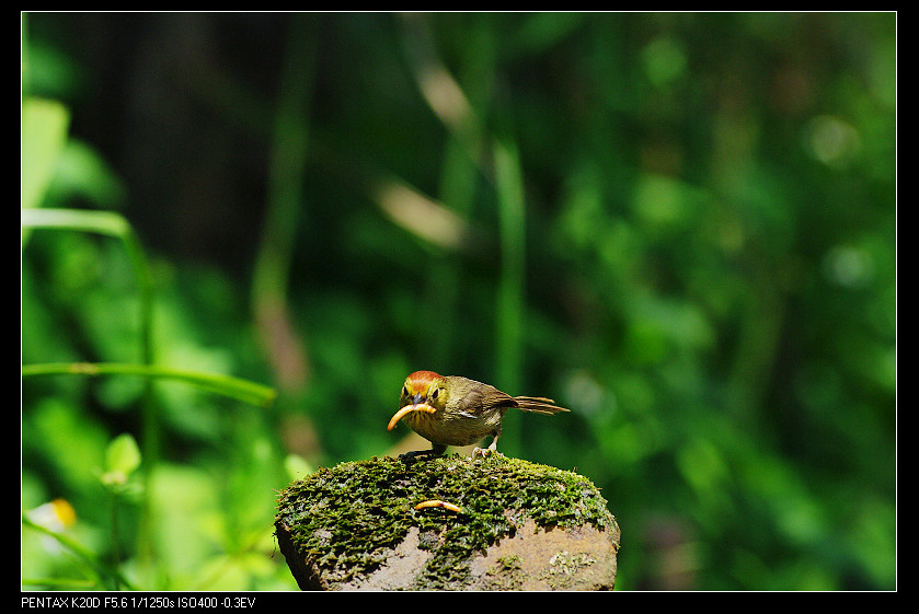 2011/04/24 農改場練習誘鳥!