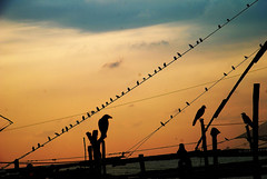 How many birds ? (GOPAN G. NAIR [ The World through my Lens ]) Tags: birds photography crow gops gopsorg gopangnair