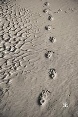 At the Rendezvous (Gomerama) Tags: blackandwhite bw bird beach sand footprints australia tasmania wombat 2011 arthurriver attherendezvous gomerama