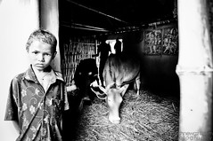 God in likely places (Neerod [ www.shahnewazkarim.com ]) Tags: white house black rural cow kid eyes village child god young shiva krishna hindu hinduism sylhet bangladesh bnw shiv cowshed srimongol