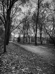 Long Long Journey (SergioR&P) Tags: blancoynegro way landscape blackwhite crossing camino invierno hdr nikond90