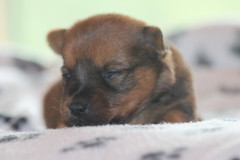 Jake 2 weeks