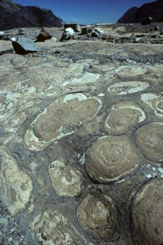 Stromatolites, associated with ancient sea