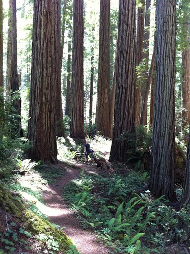 Hiking in Prairie Creek Redwoods State Park