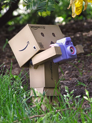 The Photographer (Yoshi Gizmo) Tags: camera flowers plant japan canon toy actionfigure japanese doll photographer powershot figure collectable danbo revoltech danboard sx200is yoshigizmo