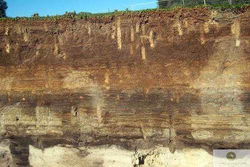 soil profile of putting green2