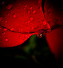 Don' t let me fall (74Pics4U) Tags: red macro water crimson droplets cotcpersonalfavorite