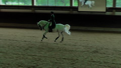 "Lipizzaner Dressage • <a style=""font-size:0.8em;"" href=""http://www.flickr.com/photos/64637277@N07/5890905560/"" target=""_blank"">View on Flickr</a>"