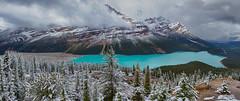 Peyto Glacier 429 (Adam Phipps) Tags: peyto peytoglacier canada rockies adamphipps rockymountains mountains amazing spectacular pano panorama blue lake glacier landscape ll
