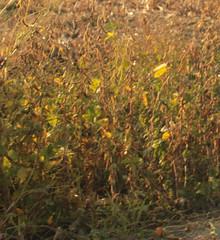 beans (JennaCitrus) Tags: color art digital photography andtherewaslight