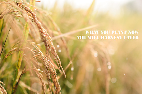 What You Plant Now You Will Harvest Later