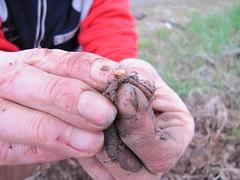 compostiere agli orti regolamentati 42